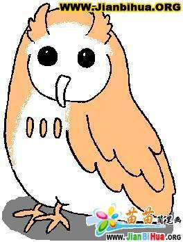 关于鸟的简笔画图片彩色版8张(第7张)