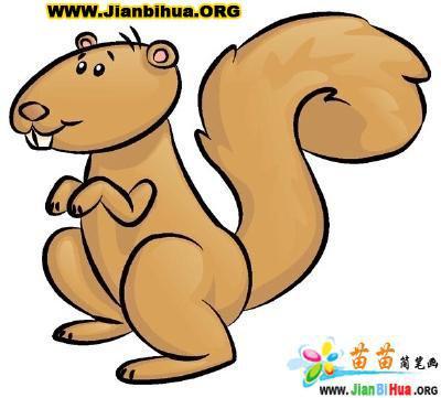 松鼠小动物简笔画6张