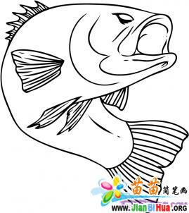 鲈鱼简笔画图片