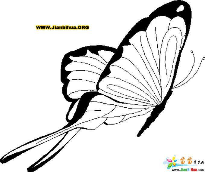 蝴蝶和飞蛾涂色卡图片14张