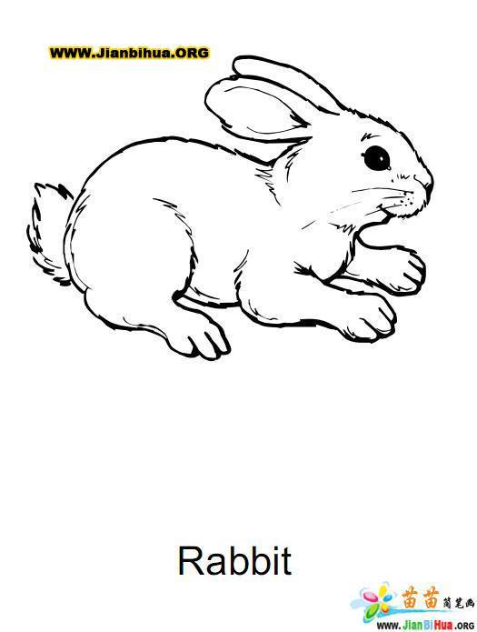 中国十二生肖简笔画作品欣赏(第4张)图片