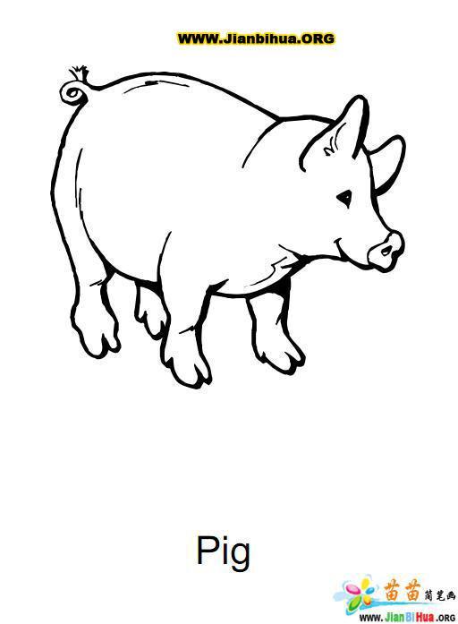 十二生肖线描简笔画-生肖马