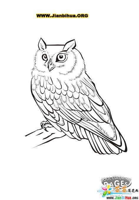 鸟类简笔画大全5张(第3张)