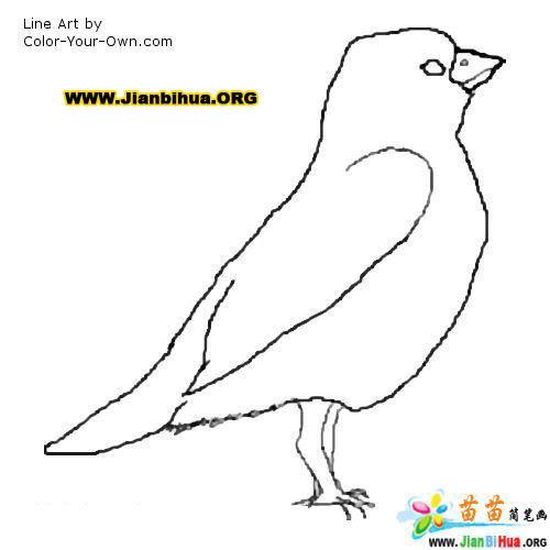 美丽可爱的小鸟简笔画