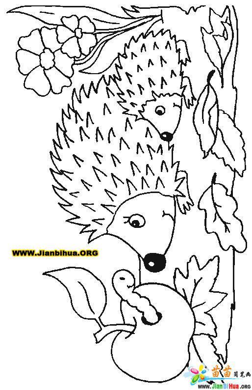 小刺猬简笔画_卡通小刺猬图片_卡通小刺猬_综合图片 ...