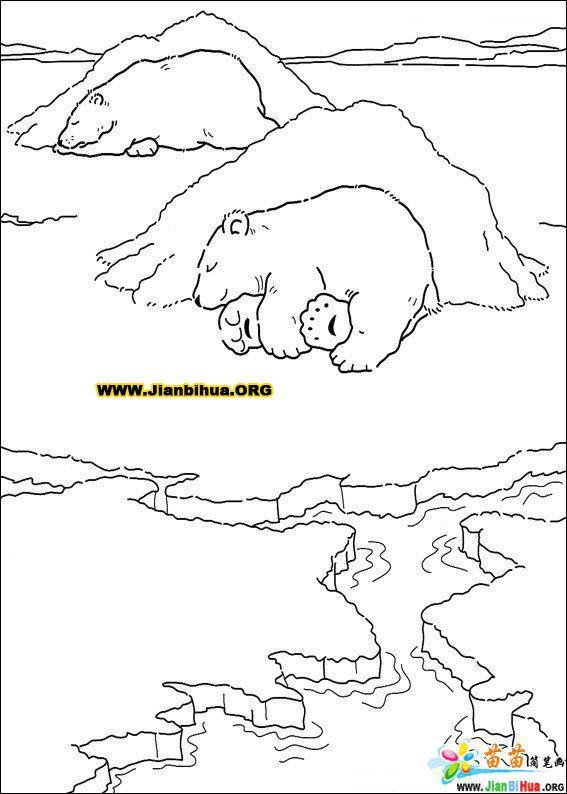 森林动物简笔画——小树袋熊21张