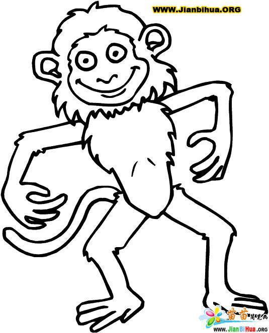 猴子简笔画图片35张 第9张图片