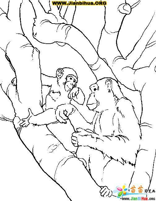 猴子简笔画图片35张(第13张)简介:该简笔画作品上传于2014-8-22,一共35张,首张简笔画图片格式为JPG,尺寸为800x742像素,大小为48 KB,由肇东市洪河乡中心小学赵德甫上传。 本站推荐教学简笔画如何运用和激发学生兴趣,唱歌简笔画图片教程,轮船简笔画图片教程,如何画人体骨架简笔画图片教程,庆新年舞龙简笔画作品,鱼涂色卡图片31张,怪兽简笔画图片教程,希望你喜欢。