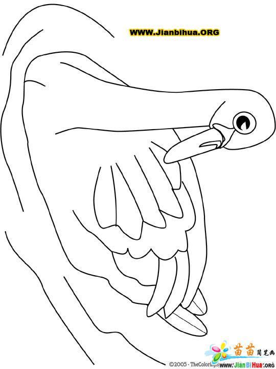 天鹅简笔画; 天鹅简笔画图片 - 手抄报简笔画 - 手抄报大全; 天鹅简笔