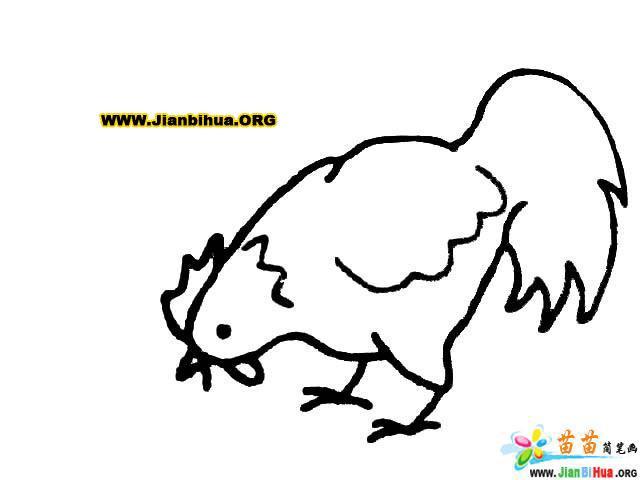 大公鸡简笔画图片(10张)