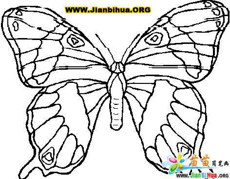 漂亮蝴蝶简笔画的画法 第3张