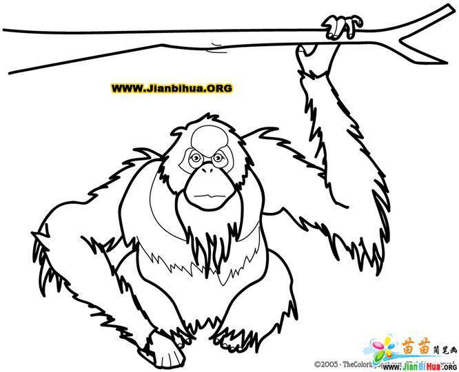 猿简笔画的画法