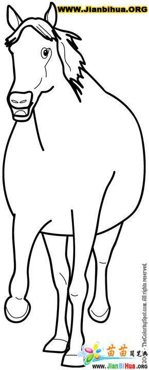 马的简笔画大全5张 第9张
