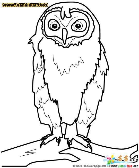 简笔画 李家成/类别:鸟类简笔画 图片张数:8张上传者:李家成尺寸:257...