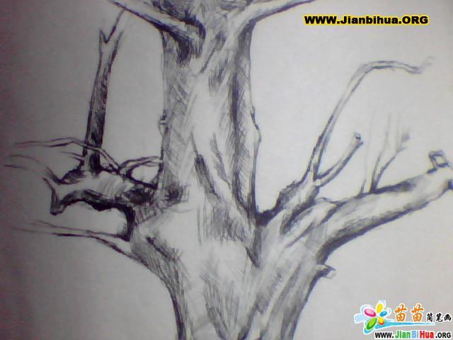 枯树的简笔画图片
