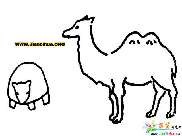 简笔画_袋鼠简笔画11张(第3张); 小鹿简笔画; 简笔画 铅笔画-兔子