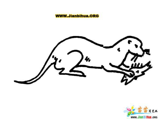 兔子简笔画 鹿简笔画 马简笔画 袋鼠简笔画11张 第7张