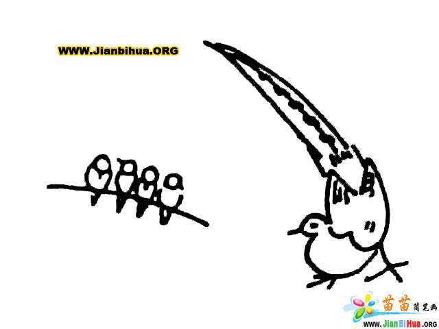 画小鸟的简笔画技法大全9张 第5张