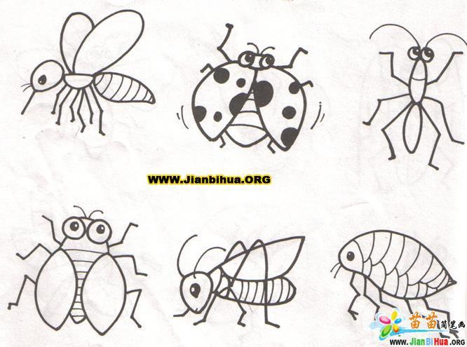 蚊子简笔画_动物简笔画大全 _ 美术必学课