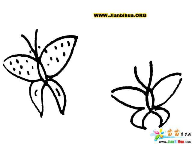 蝴蝶简笔画图片大全 10张 第8张