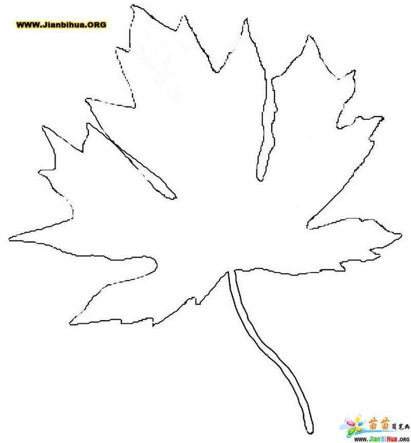 枫叶简笔画图片简介:该简笔画作品上传于2013-7-24,一共1张,首张简笔画图片格式为JPG,尺寸为564x334像素,大小为13 KB,由沁阳市王召乡兴福小学楚伟峰上传。 本站推荐荷花简笔画图片大全,荷花简笔画法教程,大刀简笔画图片教程,手拿锤子的简笔画,油漆滚筒刷简笔画图片教程,扑蝴蝶简笔画图片教程,古诗简笔画图片8张,希望你喜欢。