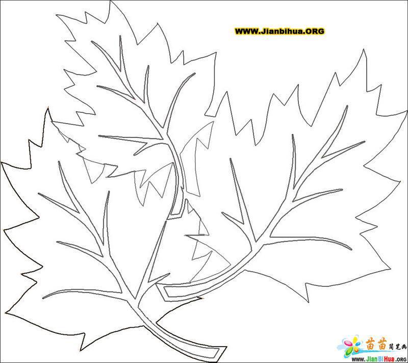 秋天的落叶时的情景简笔画3张
