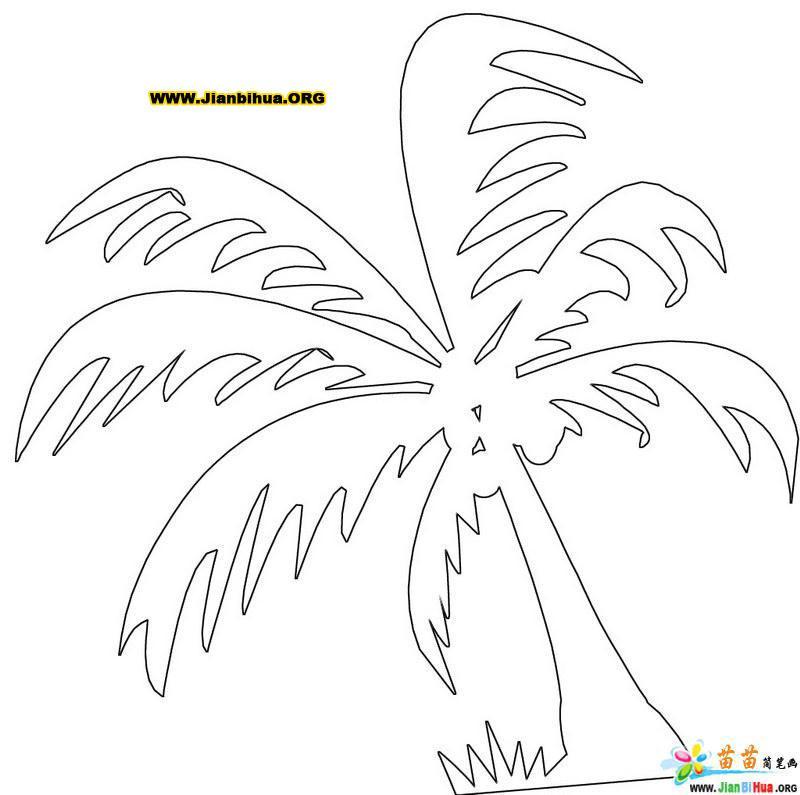 椰子树简笔画图片 植物类