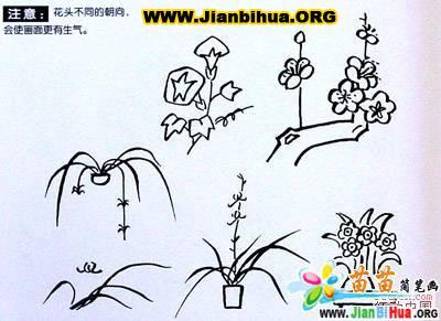 100种植物的简笔画图片 8张 第8张