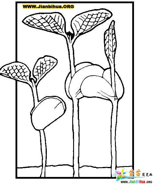 画树简笔画作品共5张
