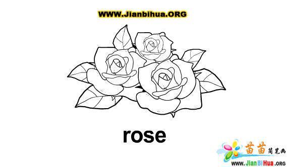 玫瑰花简笔画图片作品