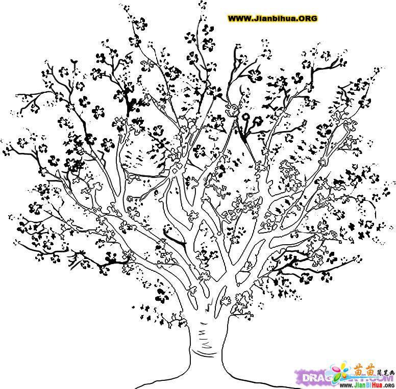 Bare Tree Outline