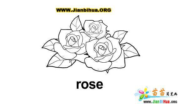 一束玫瑰花简笔画图片