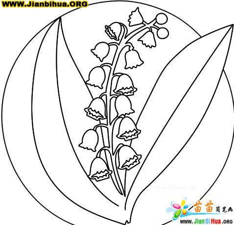 罂粟花简笔画画法内容图片展示_罂粟花简笔画画法