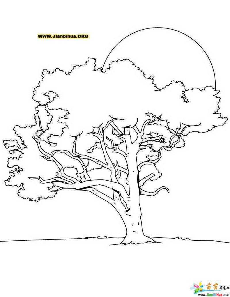 树木简笔画图片 樱桃树 第2张