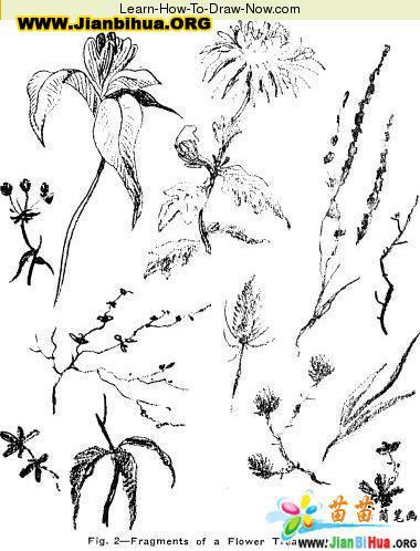 热带原始森林简笔画图 第3张