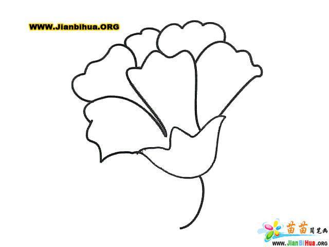 小班幼儿手绘康乃馨简笔画图片
