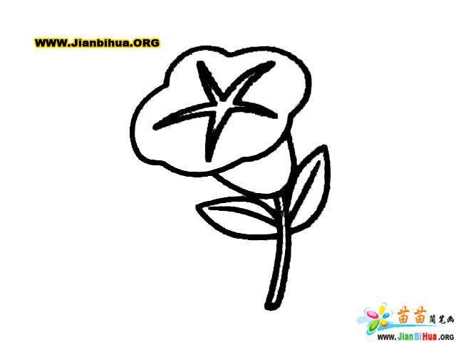 牵牛花和树叶简笔画(植物类)(第5张)