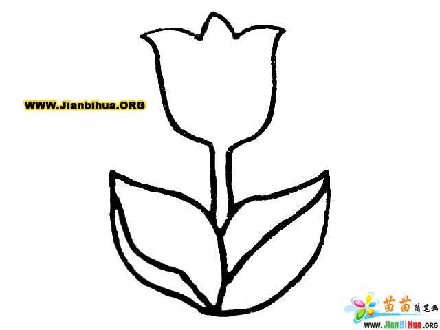 花朵简笔画图片12张