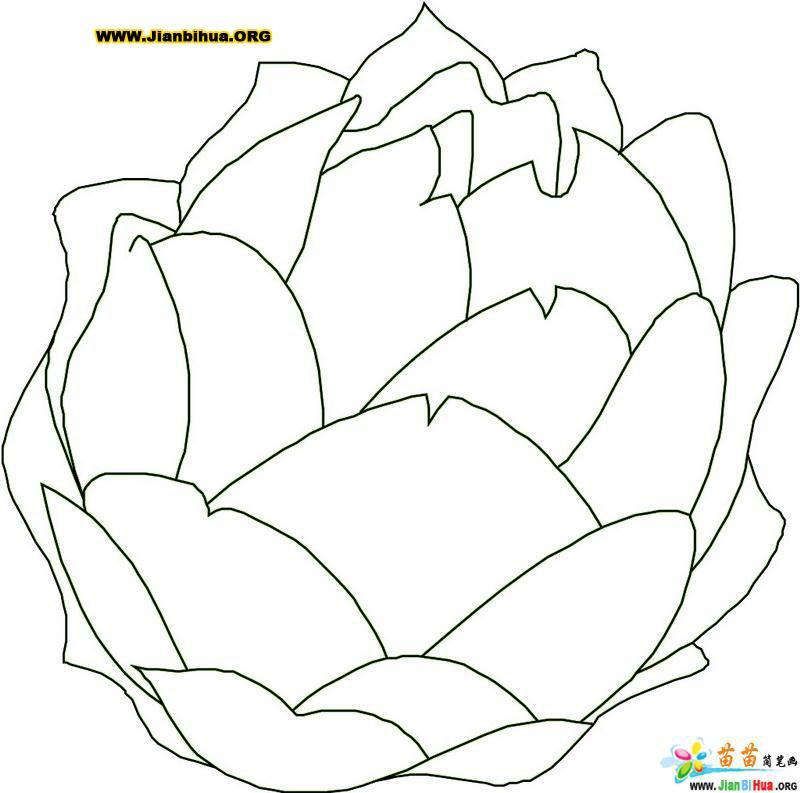 大白菜简笔画画法