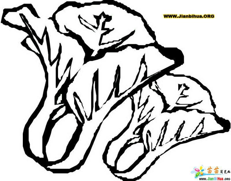小白菜简笔画的画法