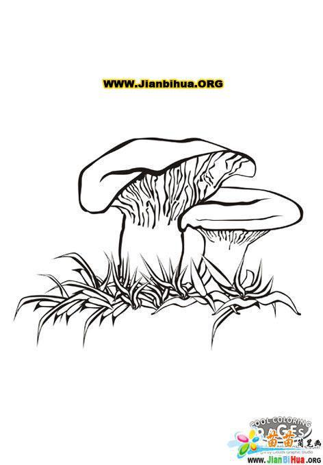 蘑菇的简笔画 第5张