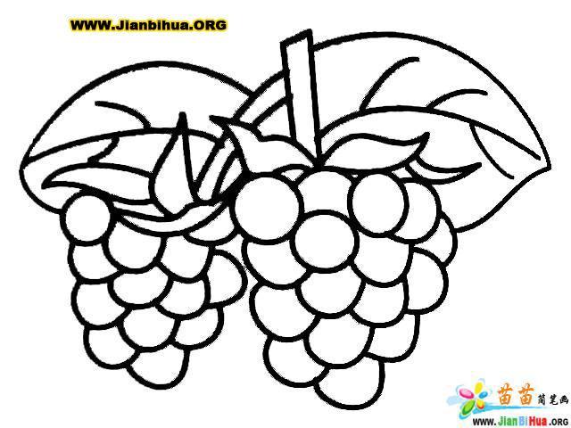 葡萄簡筆畫圖片(水果類)(第2張)