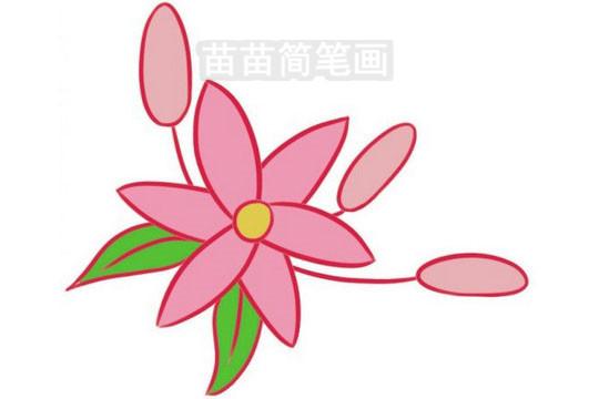 简笔画 风景简笔画 植物花卉简笔画 >> 正文内容   百合小知识:《别录