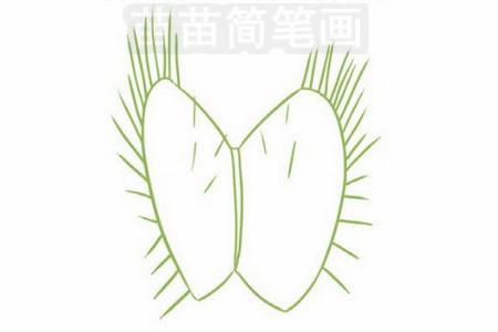 捕蝇草简笔画图片步骤三