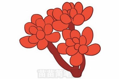 多肉植物简笔画大图