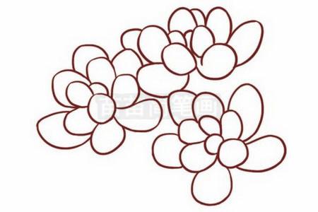 多肉植物简笔画图片步骤二