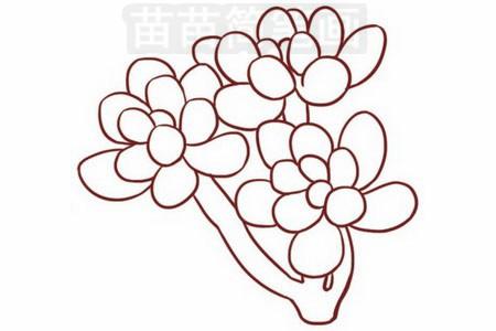 多肉植物简笔画图片步骤三