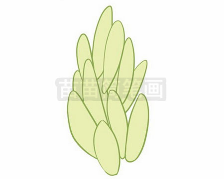 多肉植物简笔画图片大全作品二