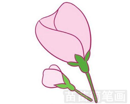 海棠简笔画图片大全 教程