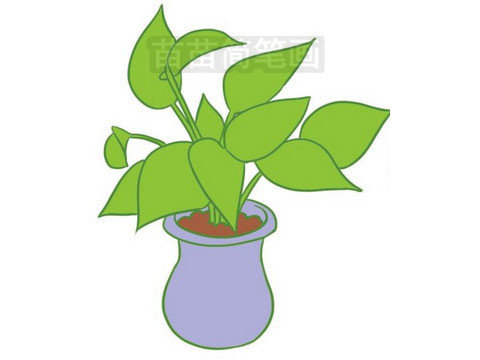 简笔画 风景简笔画 植物花卉简笔画 >> 正文内容   绿萝小知识:绿萝